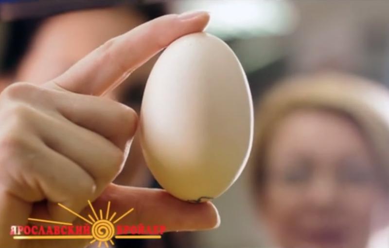 Ярбройлер — Живое Яйцо